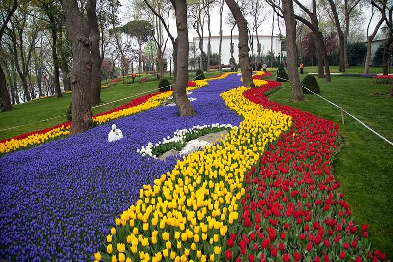 Chiêm ngưỡng không gian của hoa Tulip