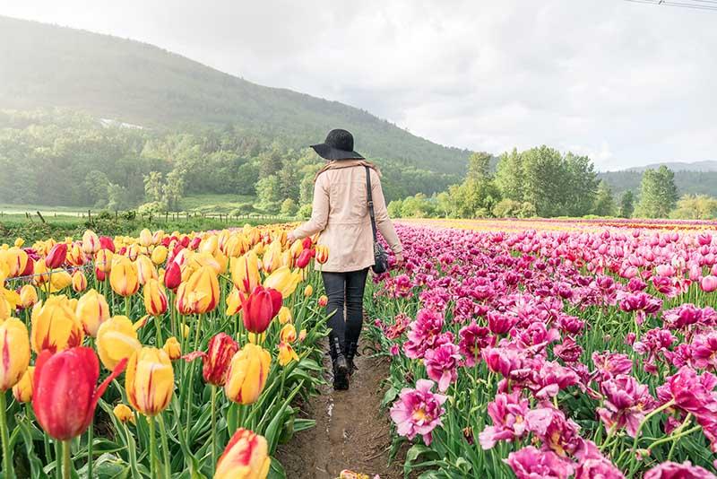 Cô gái ở giữa cánh đồng hoa Tulip đẹp nhất