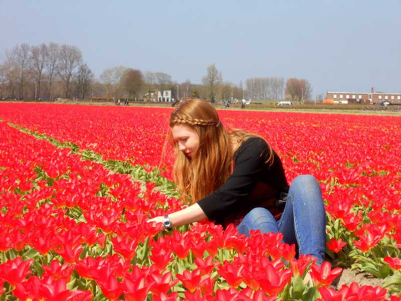 Hình ảnh hoa Tulip đỏ đẹp nhất