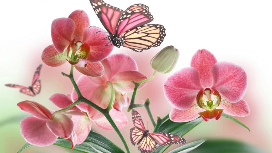 Hoa Đỗ Quyên gắn liền với thanh xuân