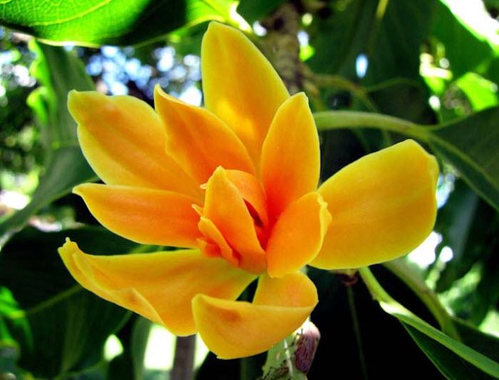Hoa Đỗ Quyên nở giữa rừng
