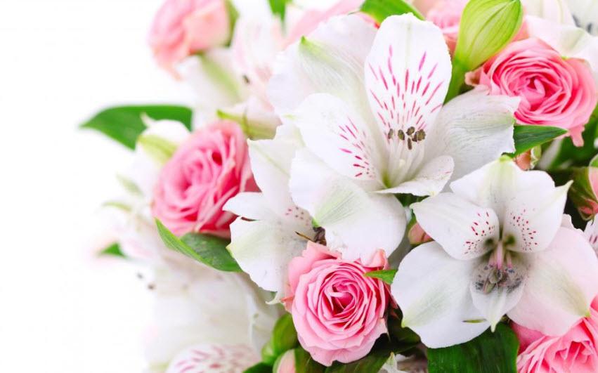 Hoa Đỗ Quyên trang trí đám cưới