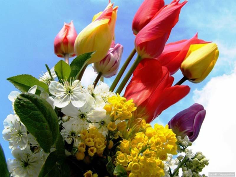 Hoa Tulip đẹp nhất