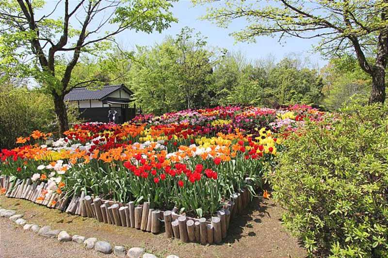 Hội chợ hoa Tulip