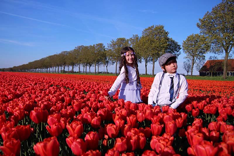 Vườn hoa Tulip đỏ ở hà lan