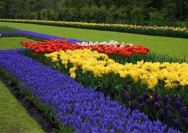 Ý nghĩa của hoa Tulip