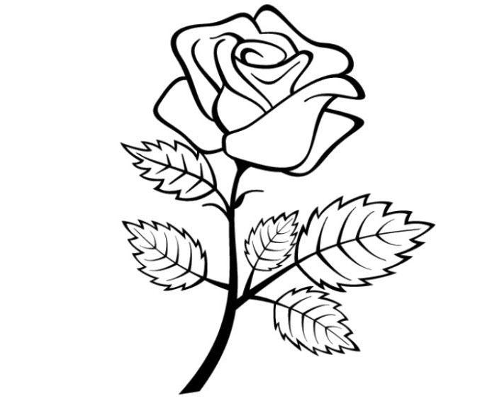 Tô màu hoa hồng đẹp