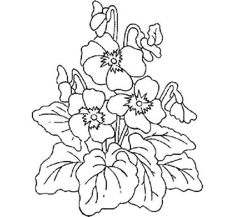 Tranh tô màu bông hoa cho bé 5 tuổi đẹp