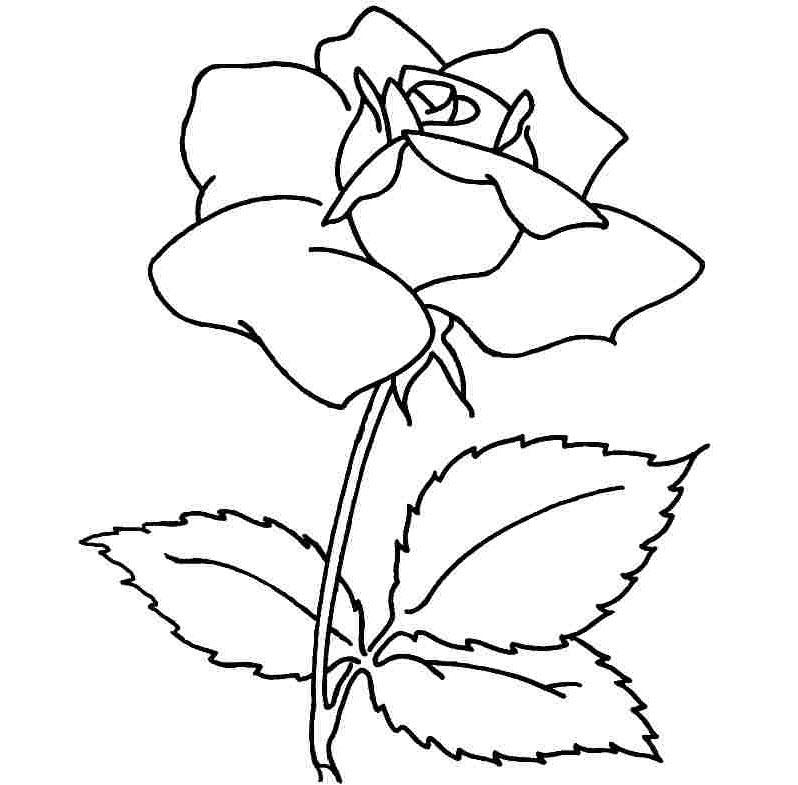 Tranh tô màu bông hồng cho bé gái đẹp