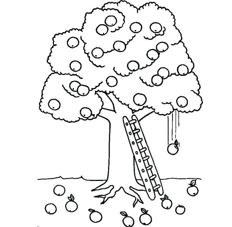 Tranh tô màu cây ăn quả cho bé 5 tuổi