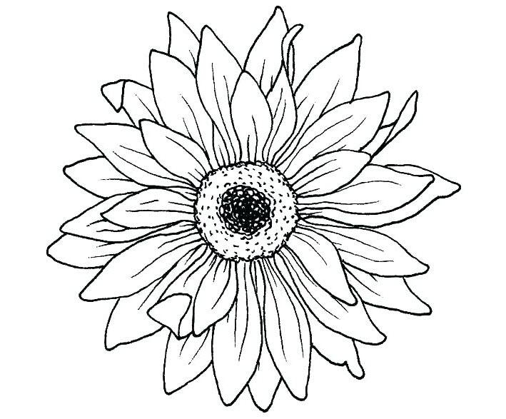 Bông hoa cho bé tô màu