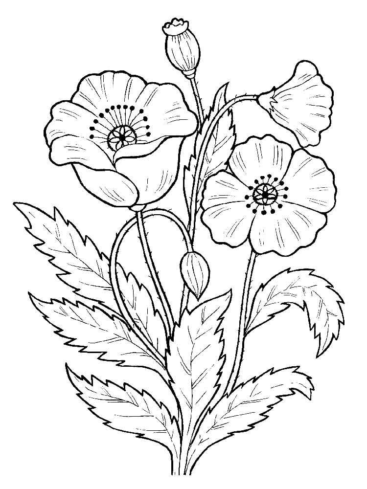 Cành hoa cho bé tô màu