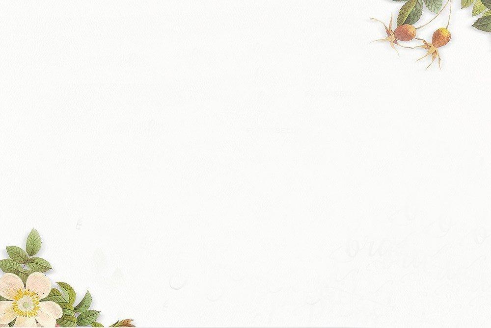 Hình nền trắng powerpoint đẹp