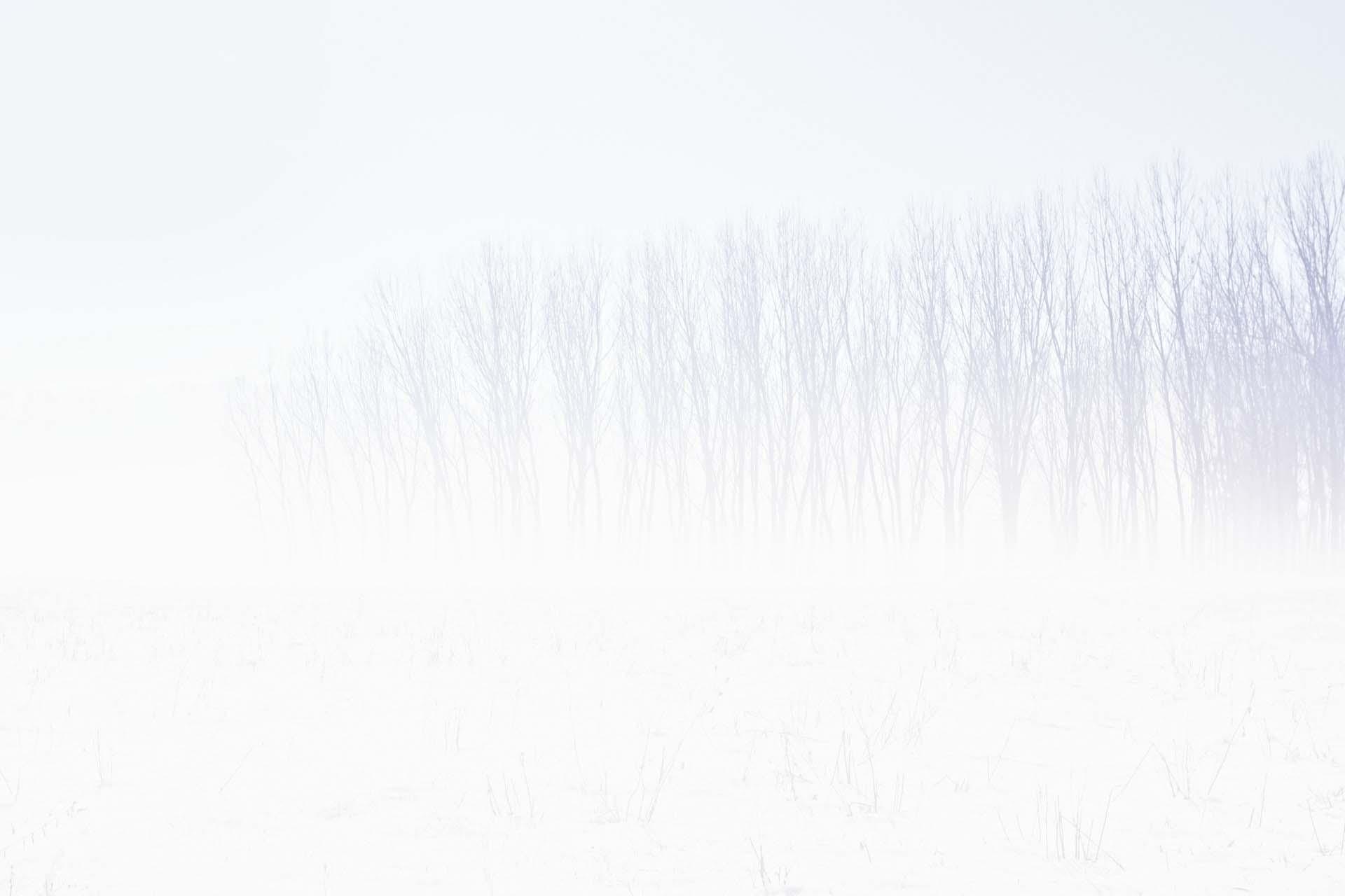 Hình nền tuyết trắng đẹp