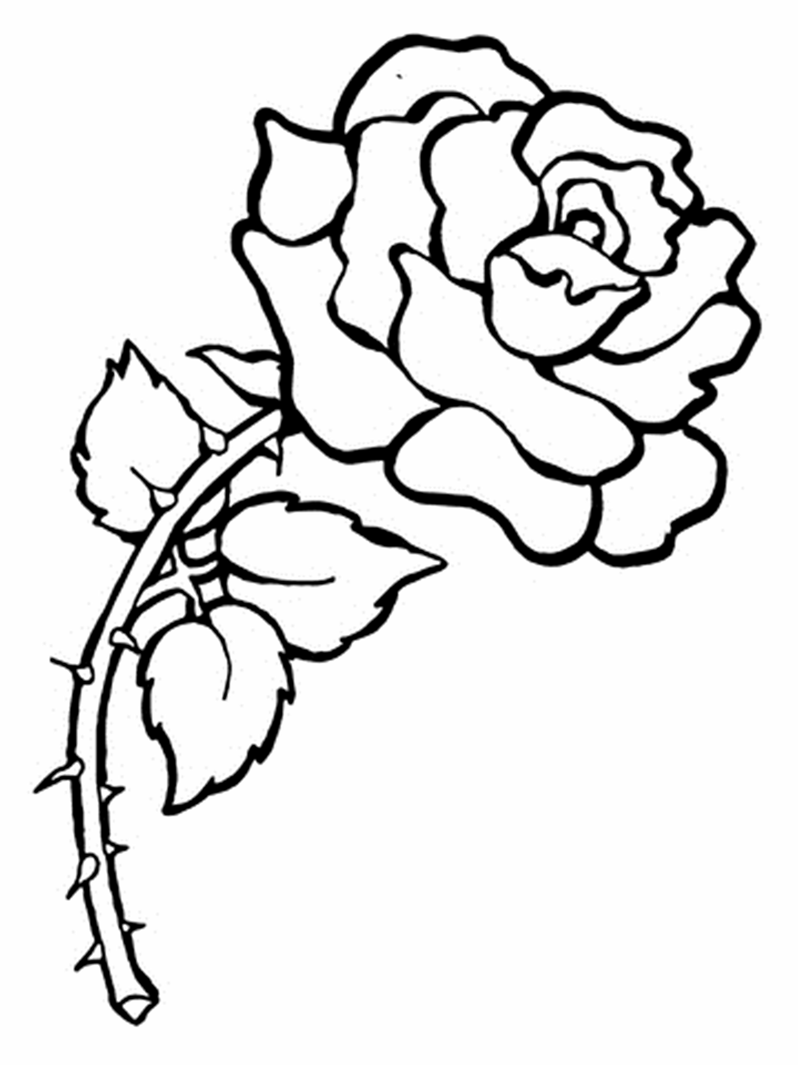 Hình tô màu cành hoa