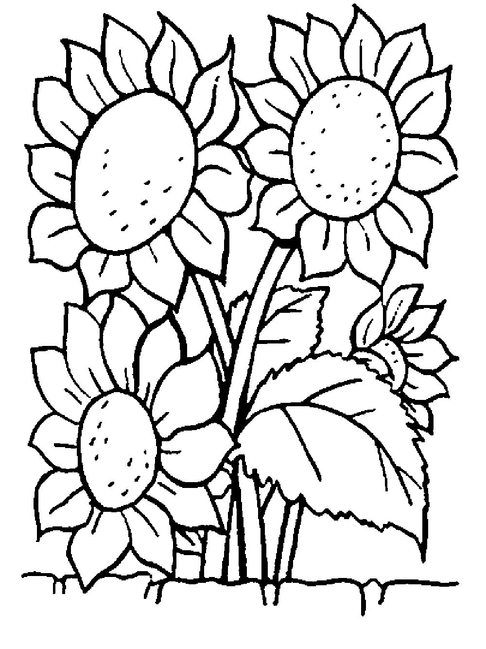 Hình tô màu những bông hoa hướng dương đẹp