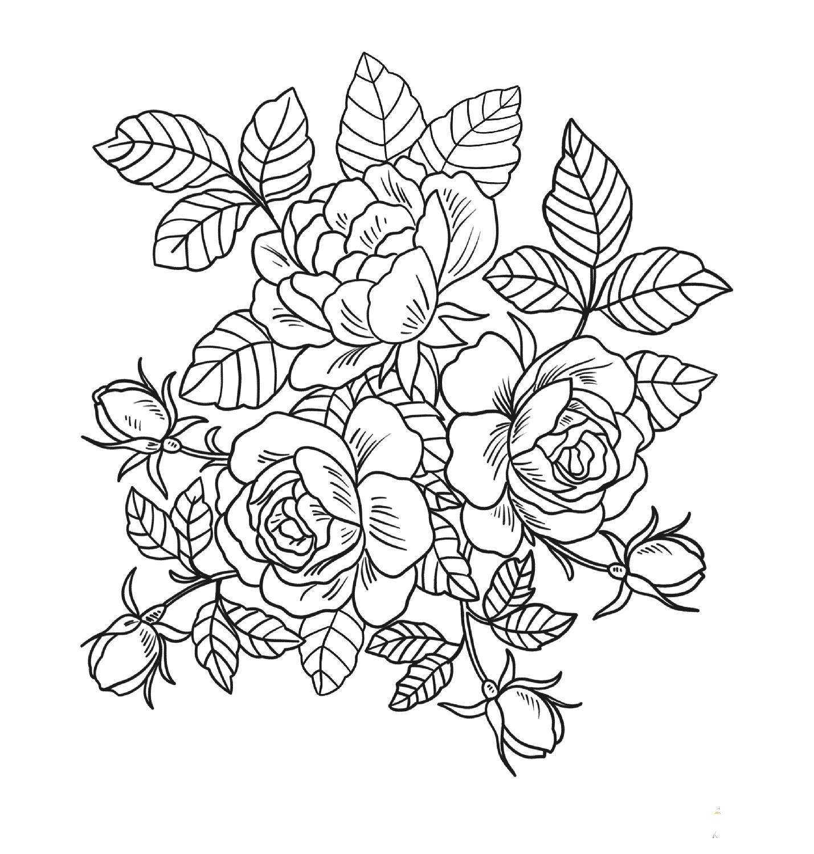 Tô màu tranh hoa hồng
