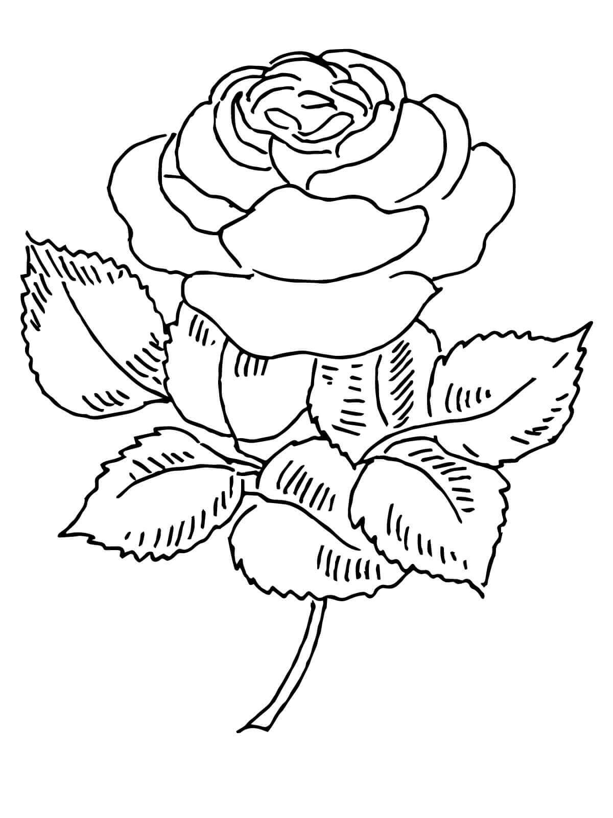 Tranh tô màu bông hoa hồng