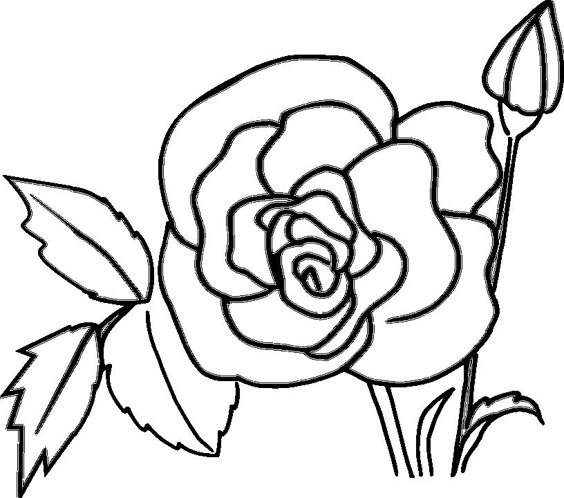 Tranh tô màu cành hoa hồng đẹp