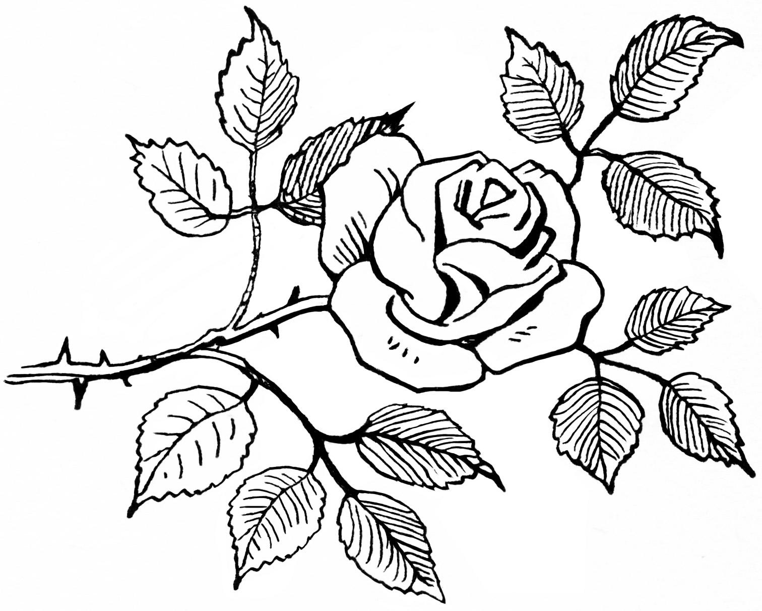 Tranh tô màu cành hồng đẹp