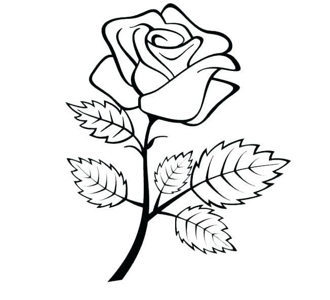 Tranh tô màu chủ đề hoa hồng
