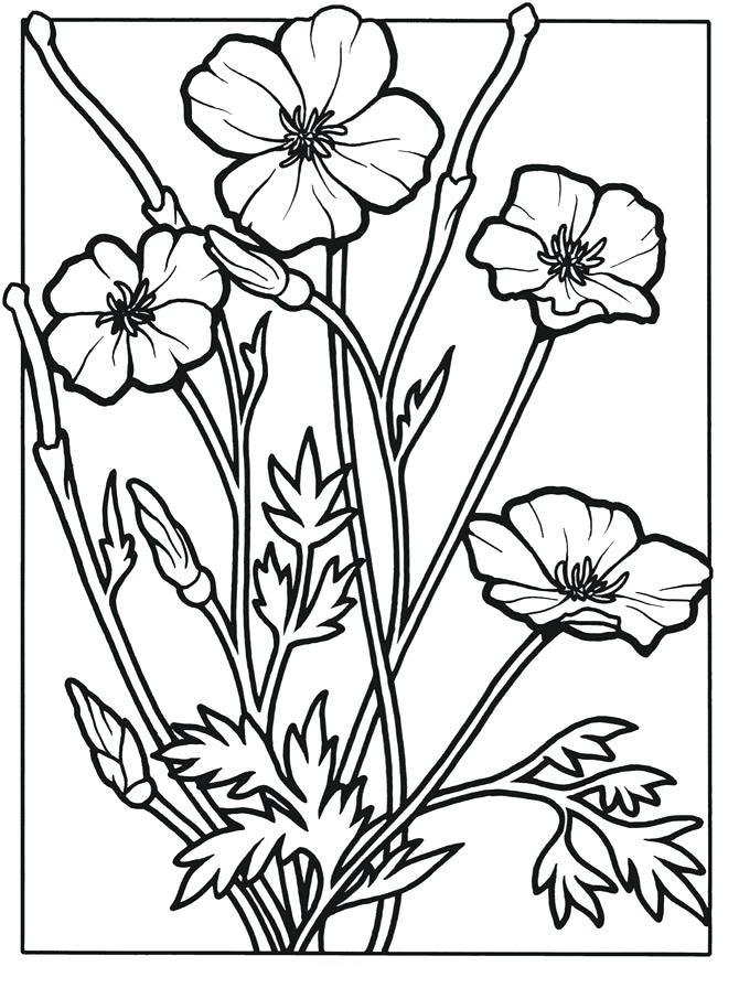 Tranh tô màu hoa cỏ