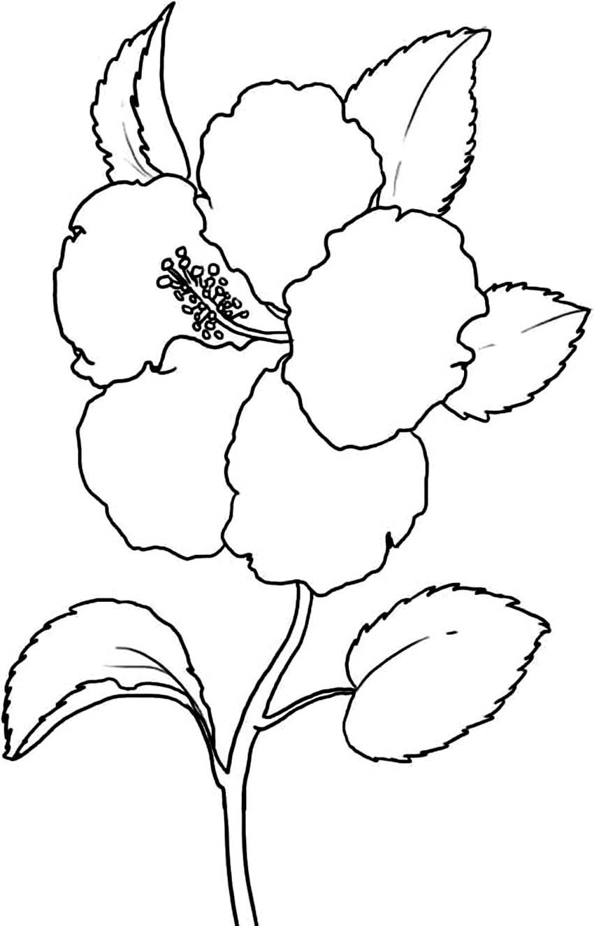 Tranh tô màu hoa đẹp nhất