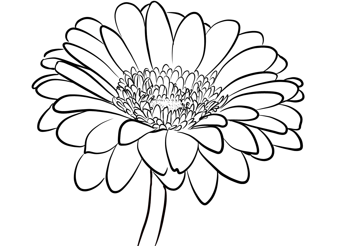 Tranh tô màu hoa đồng tiền
