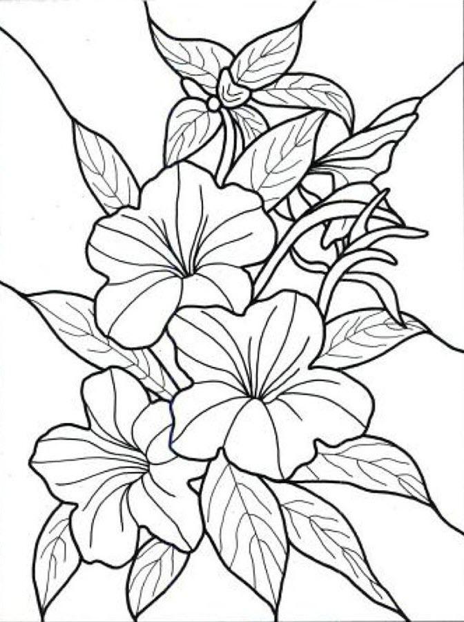 Tranh tô màu hoa lá cực đẹp