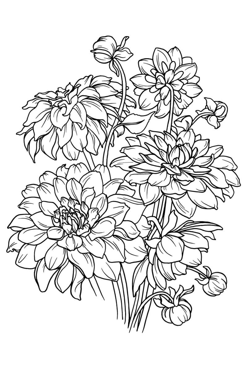 Tranh tô màu hoa thược dược đẹp