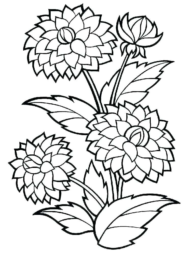 Tranh tô màu hoa thược dược