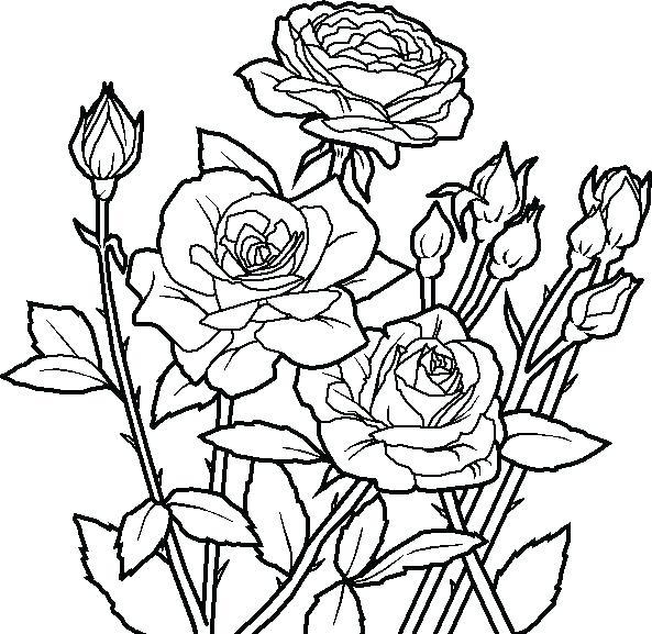Tranh tô màu những bông hoa hồng đẹp
