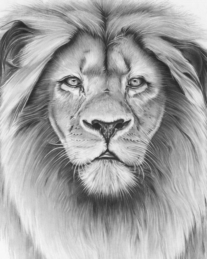 Hình vẽ sư tử dễ thương