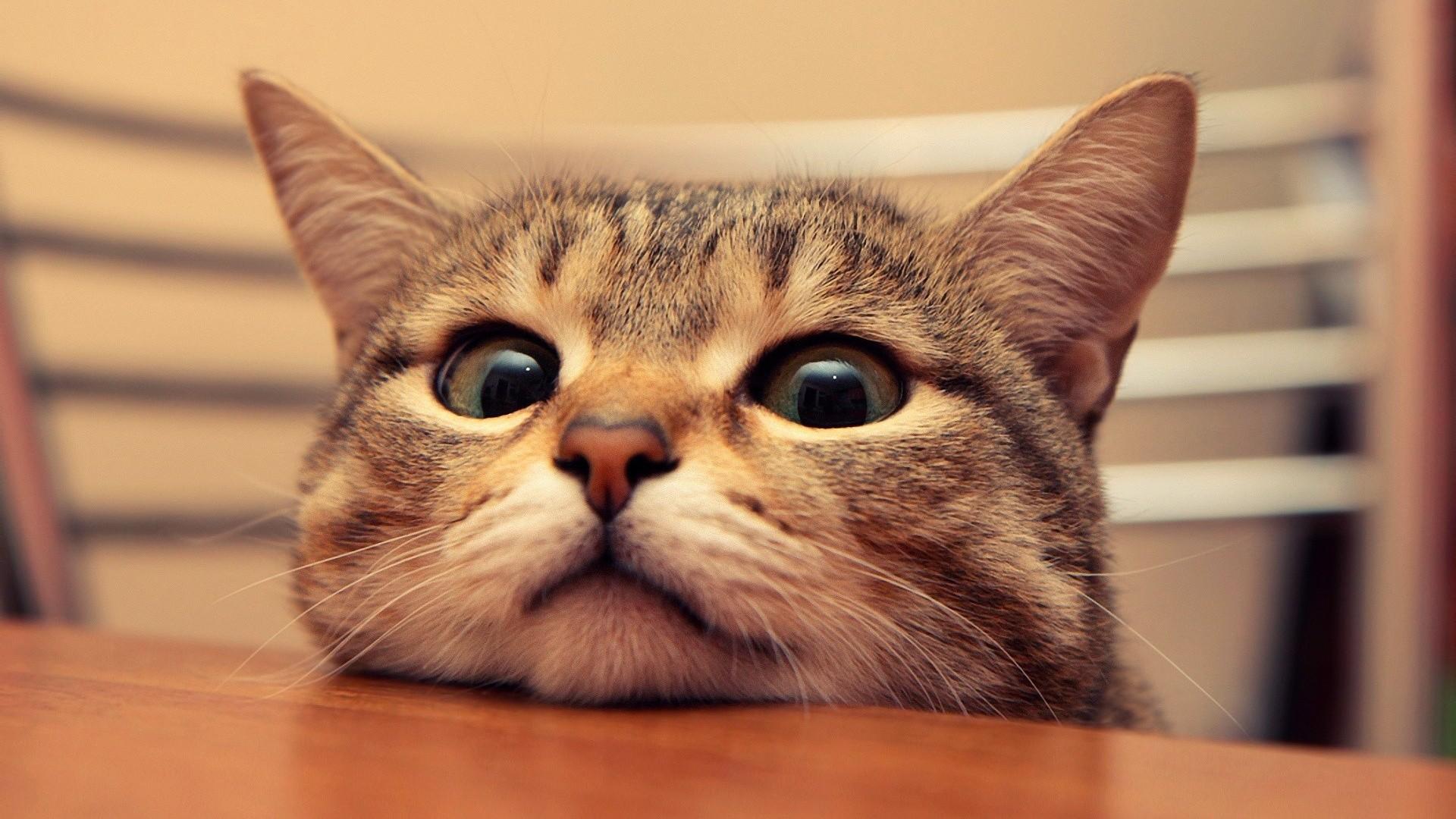 Ảnh nền chú mèo dễ thương