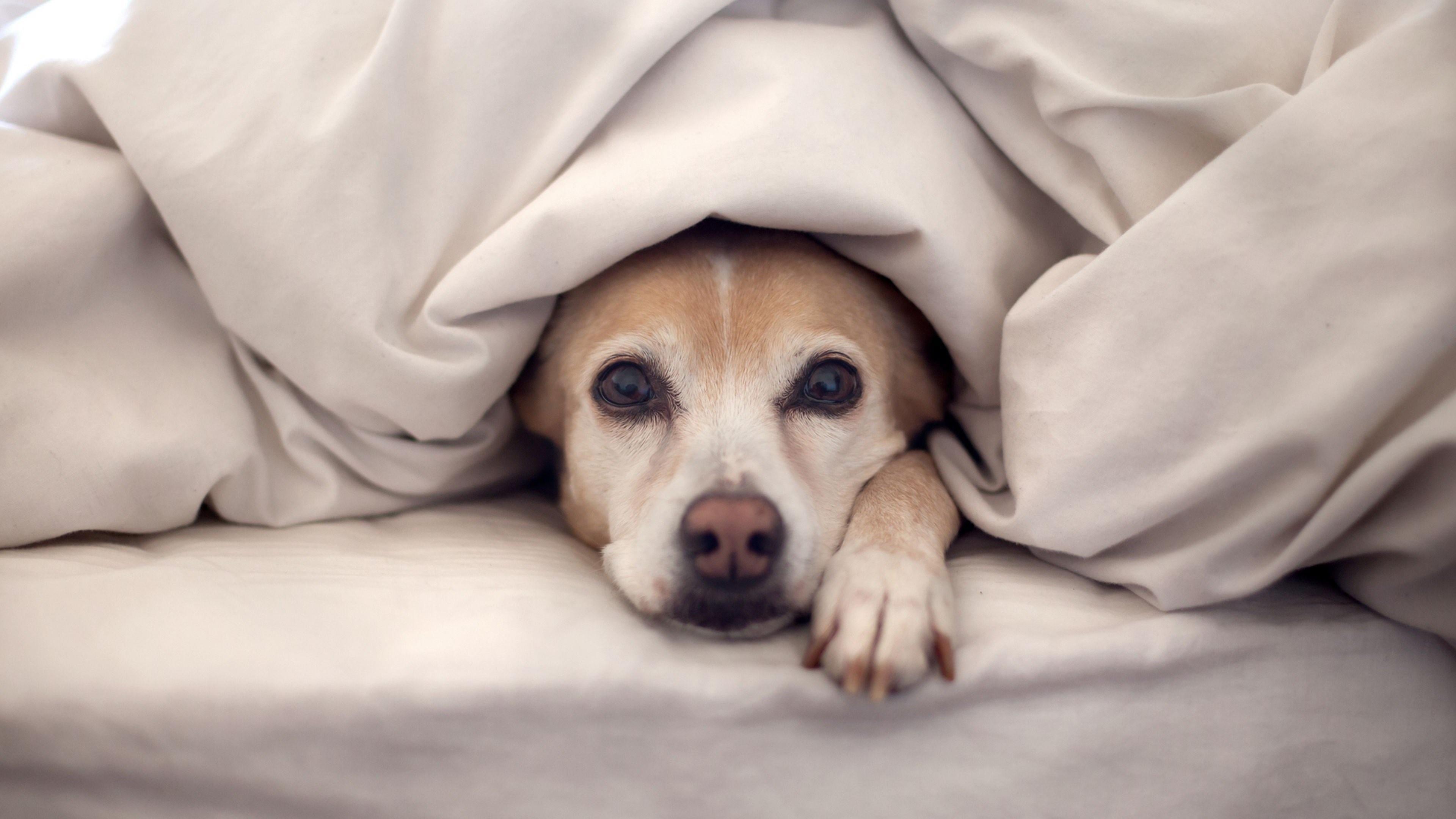 Hình nền máy tính chú chó dễ thương
