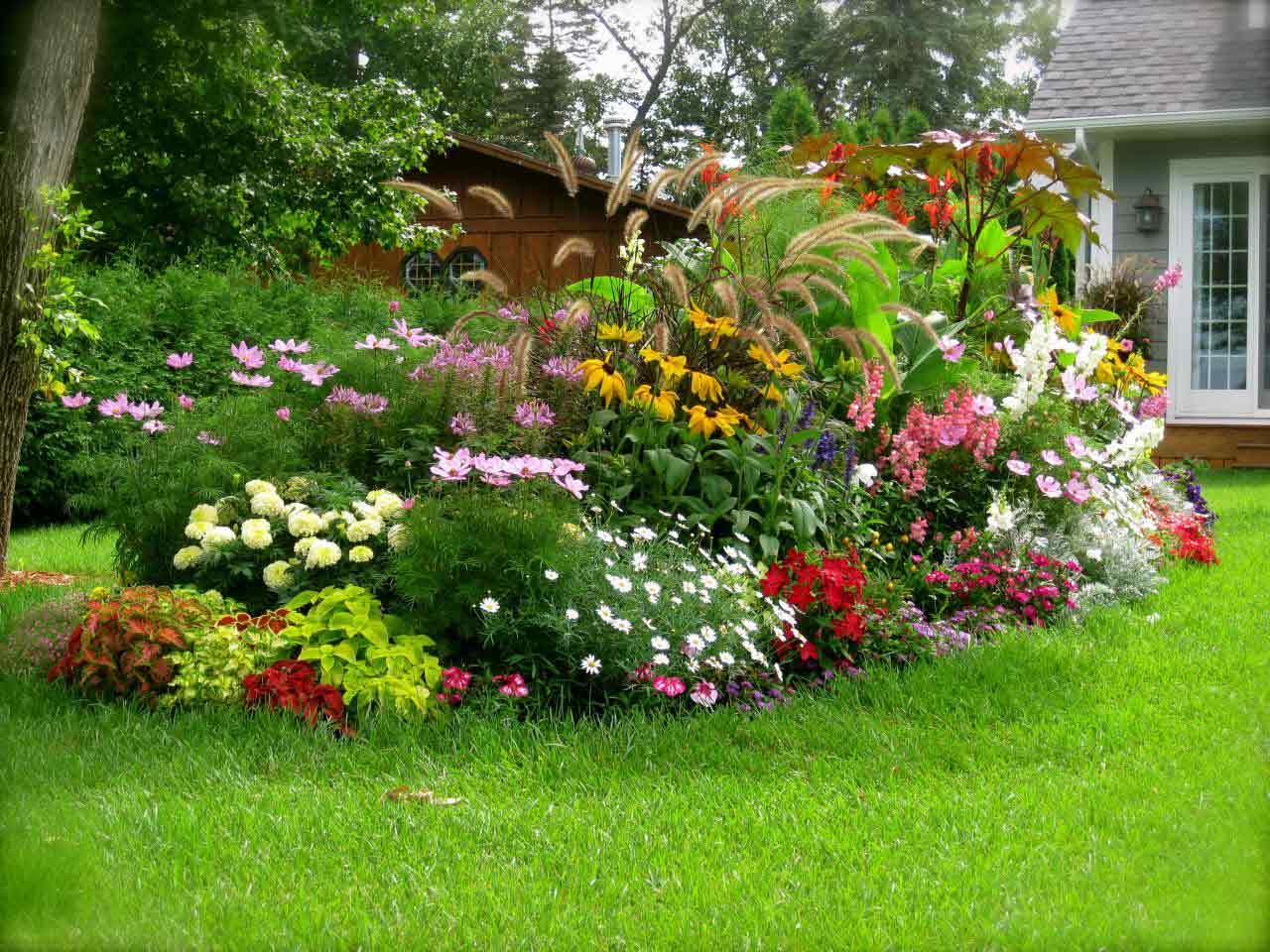 Hình ảnh cây cảnh trong vườn đẹp