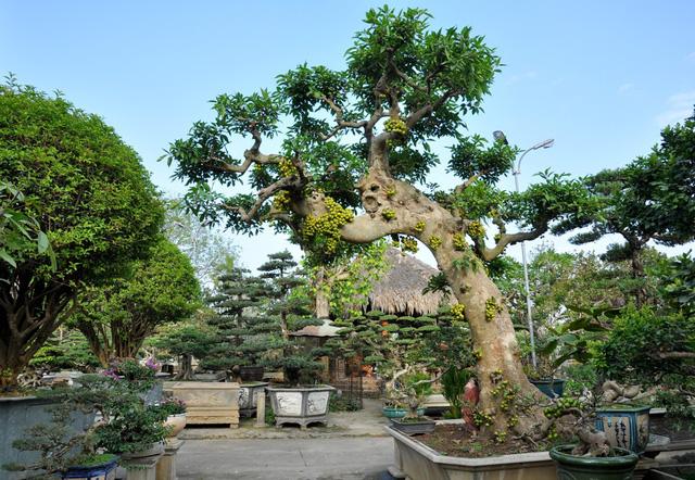 Hình ảnh về cây cảnh đẹp
