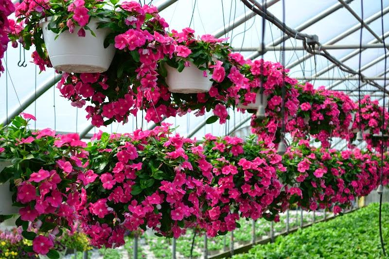 Hình ảnh vườn cây hoa cảnh đẹp
