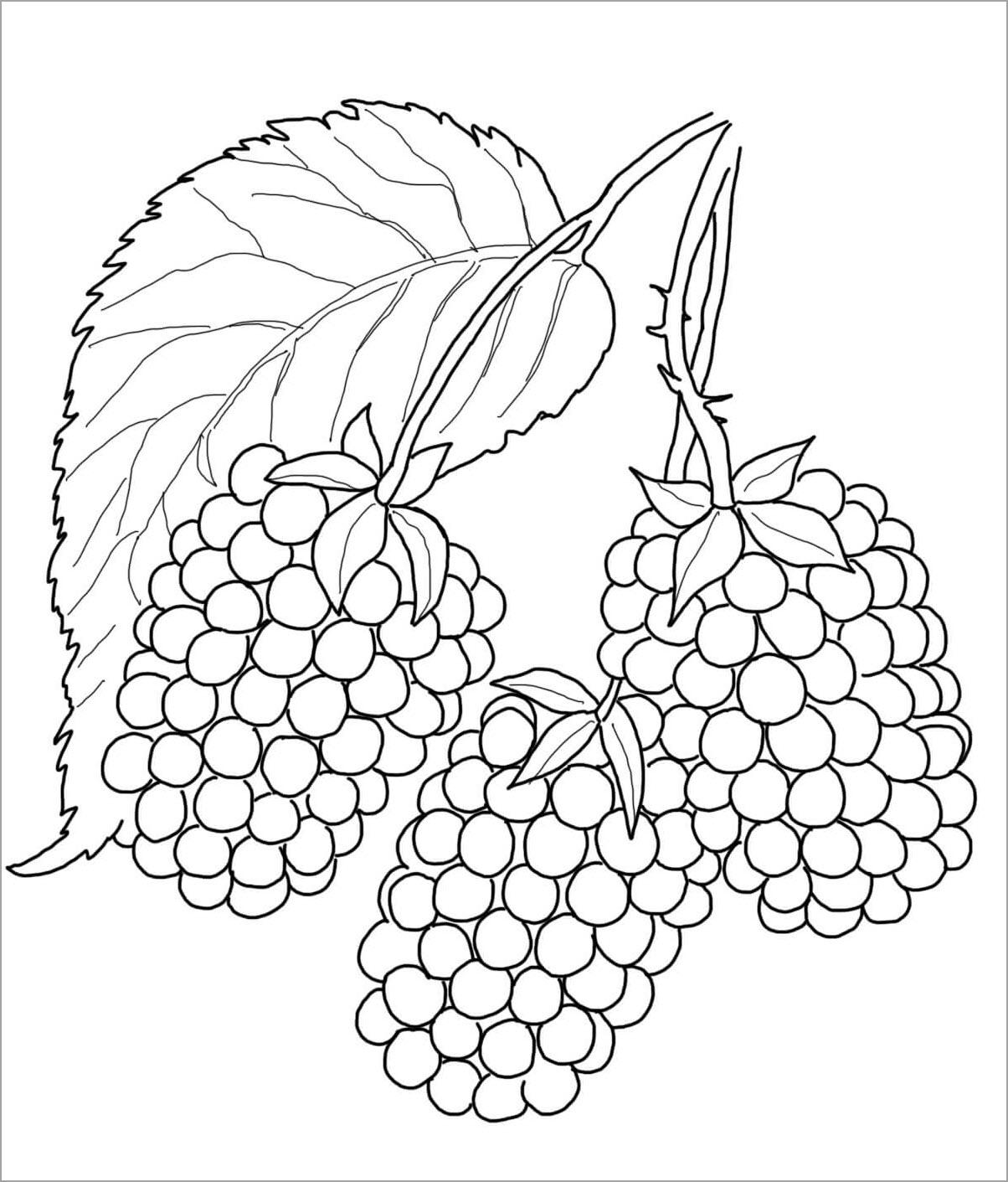 Hình tập tô màu trái cây cho bé