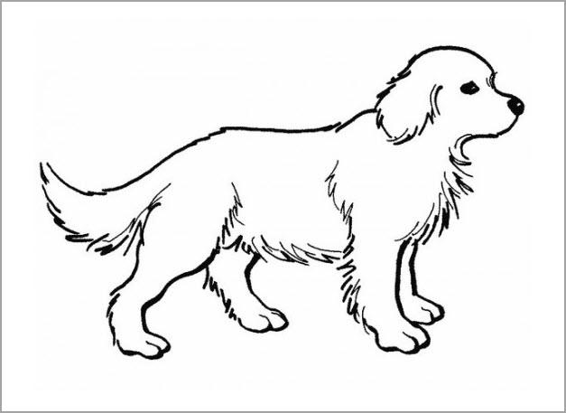 Tô màu con chó