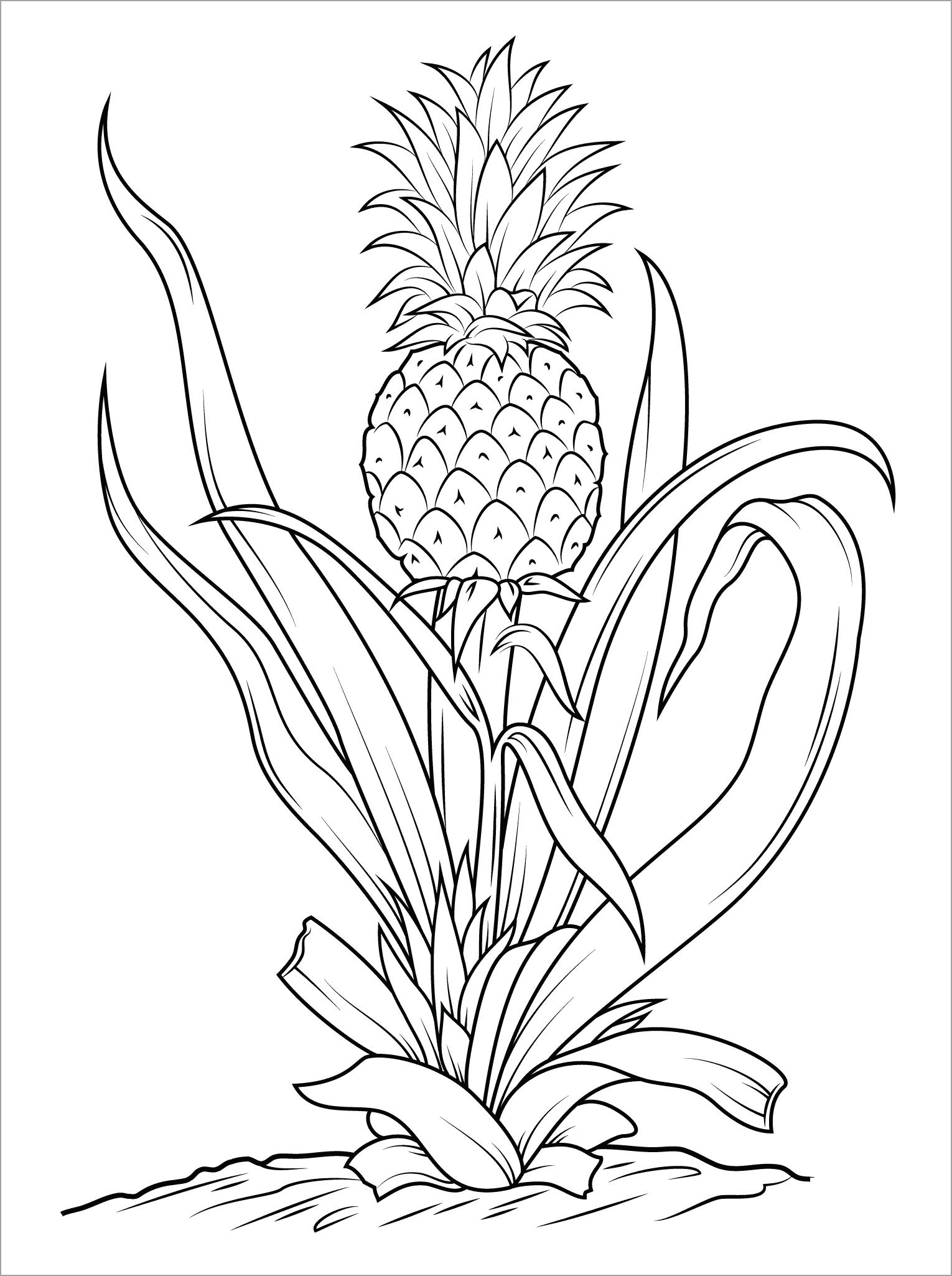 Tranh tô màu cây dứa