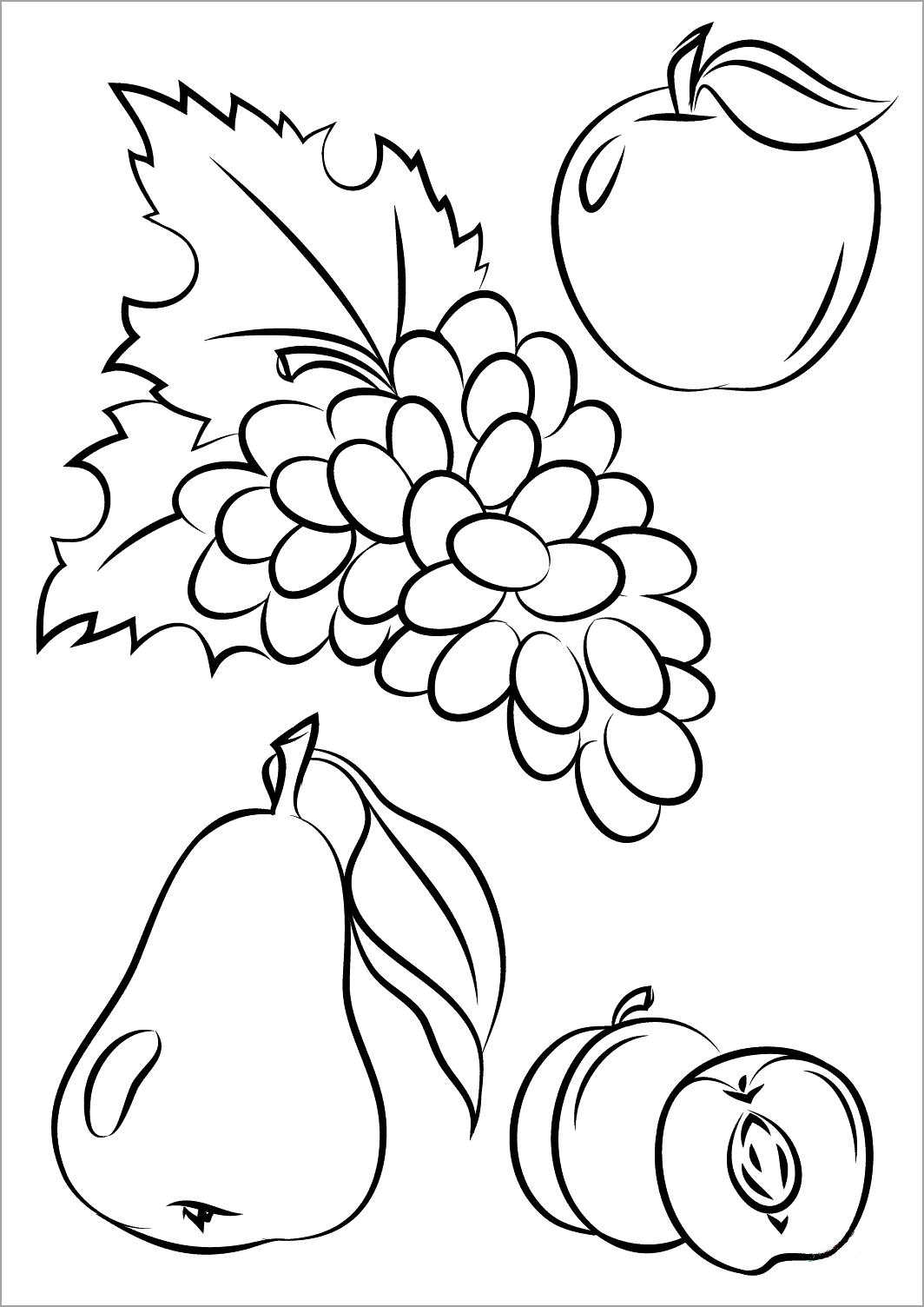 Tranh tô màu một số loại hoa quả