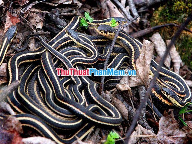Loài rắn mang một sức mạnh tâm linh rất lớn lao