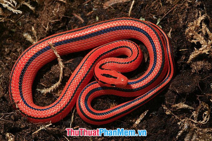 Mơ thấy rắn là điềm lành hay điềm dữ?