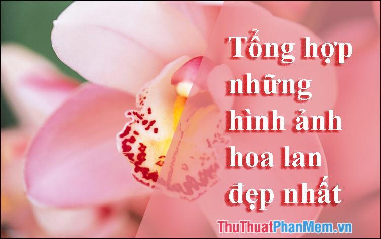 Hoa Lan đẹp - Tổng hợp những hình ảnh hoa Lan đẹp nhất