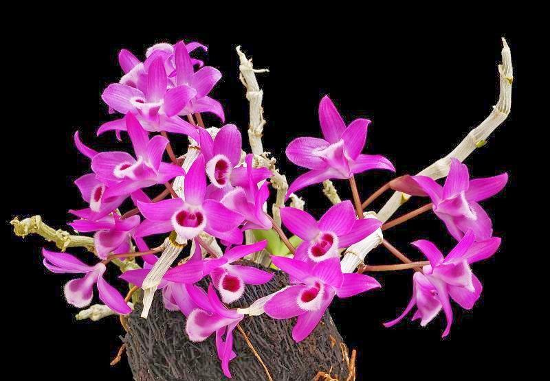 Bộ sưu tập hoa lan đà lạt đẹp nhất