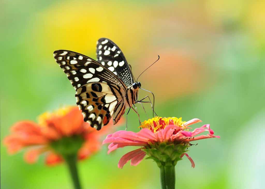Bướm bướm đẹp anime