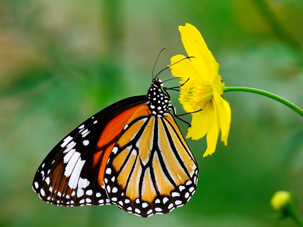 Bươm bướm đẹp