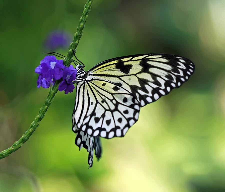 Chiêm ngưỡng hình ảnh bướm xinh bay ngập trời