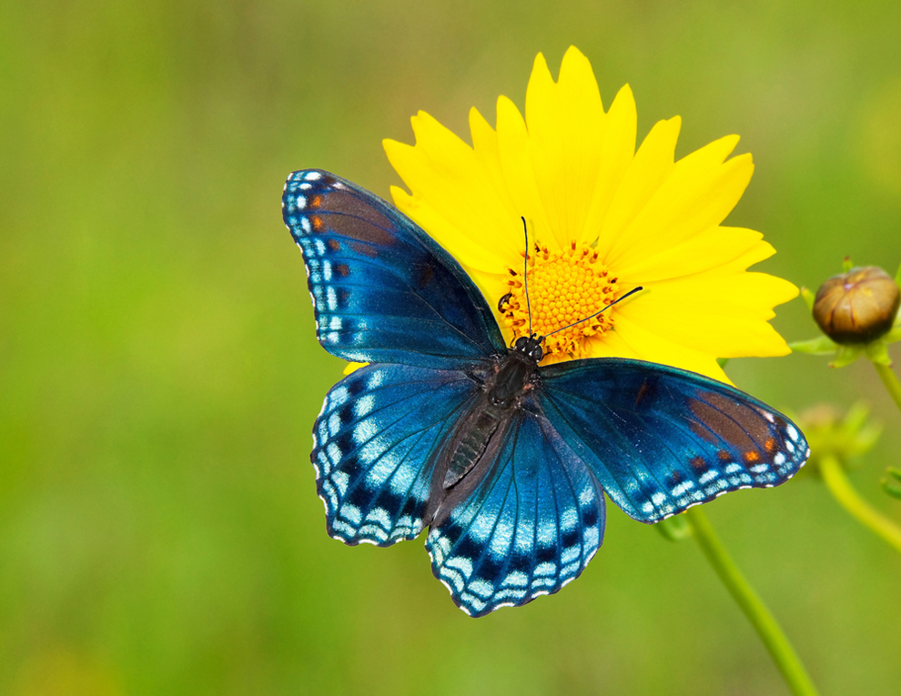 Chơi game bươm bướm tìm hoa